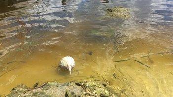 Los peces muertos que llegan a la orilla causan un olor penetrante.
