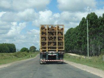 <div>Transporte de madera en Río Negro.<br></div>