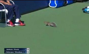La ardilla en el US Open