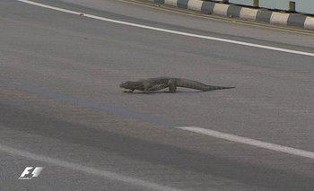 El reptil que asustó a Verstappen cruzando la pista de Singapur