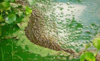 Floraciones de cianobacterias en lago Martínez