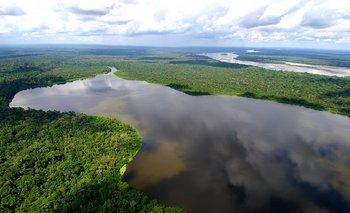 En 2020 se perdió una superficie equivalente a la de Holanda en bosques vírgenes tropicales
