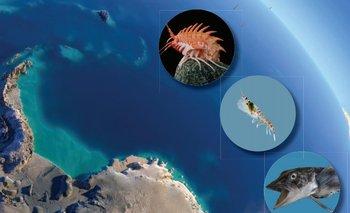 La foto de tapa del atlas muestra algunos de los seres vivos que se describen en su interior. En total, incluye 9.000 especies, 800 mapas y 100 fotografías en color