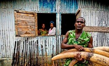 Un guarda muestra las armas y colmillos de elefante capturados a un grupo de cazadores furtivos de Gabón.