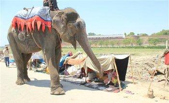 Raju mendigando en Allahabad, India