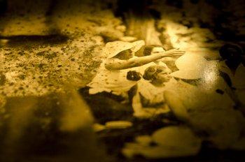 Muchas veces, los hongos en las fotos se ven como simples manchas de humedad