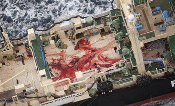 La cubierta ensangrentada del buque factoría nipón Nisshin Maru, en la Antártida, el 5 de enero de 2014