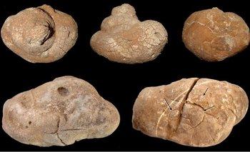 Excrementos fosilizados de 240 millones de años de antigüedad