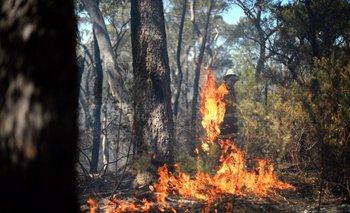 Los incendios ponen en peligro a los animales autóctonos de Australia. En 2009, un gran fuego mató a un millón de animales salvajes