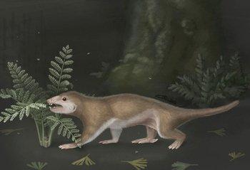 """Representación del """"Megaconus"""", una especie que también se cree perteneció a la familia de los mamíferos"""