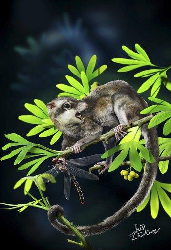 """Representación de la especie """"Arboroharamiya"""", un mamífero jurásico adaptado a vivir en los árboles"""