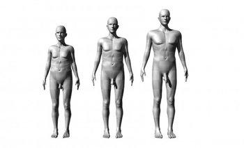 Tres de las figuras usadas. A la izquierda, los valores mínimos de altura, anchura de hombros y longitud de pene considerados en el estudio y a la derecha, los máximos. En el centro, los valores medios.