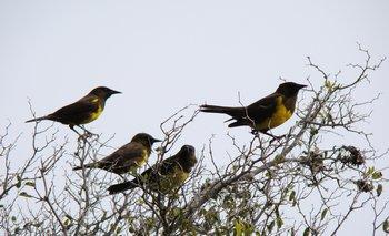 Unas 70 especies de árboles nativos y más de 120 de aves conforman el paisaje de este espacio a proteger