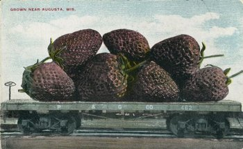 """Crecidas en Augusta, Wis"", 1910. Fotomontaje de un grupo de frutillas gigantes"