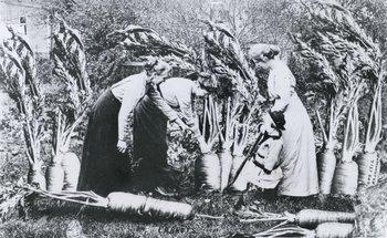 """Zanahorias"", 1913"