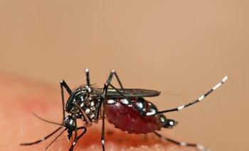 El mosquito aedes aegypti está en el país desde hace años