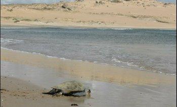 Karumbé es una ONG dedicada a la protección de las tortugas marinas