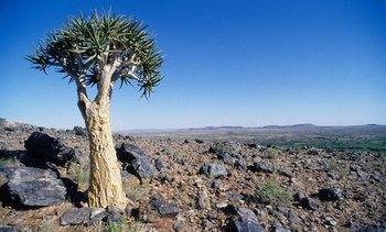 Hábitat natural de la especie en la Tierberg Nature Reserve, Sudáfrica